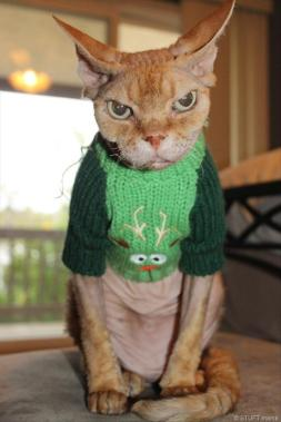 Angry cat wearing ugly Christmas sweater