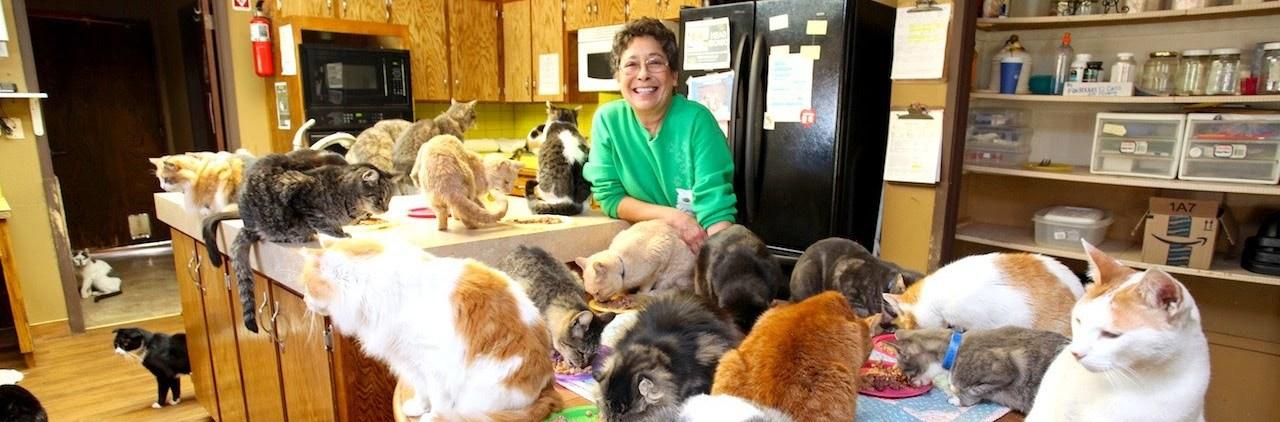 feminist catlady alone cats